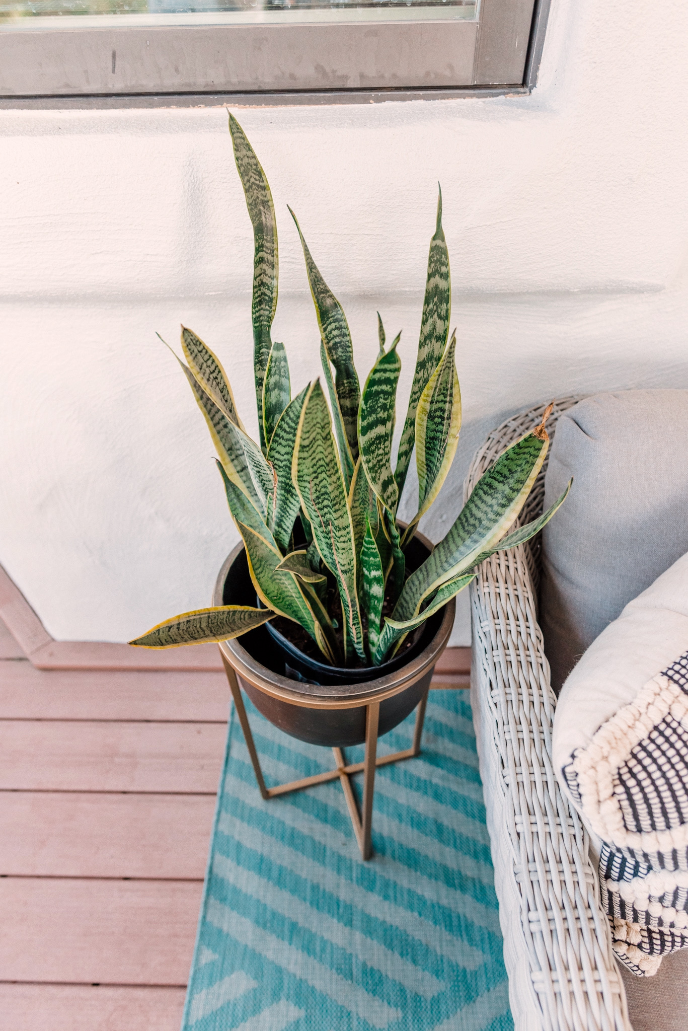 CB2 OUTDOOR DECOR featured by top San Diego lifestyle blogger, Navy Grace. | CB2 Furniture by popular San Diego life and style blog, Navy Grace: image of a snake tongue plant in a black and gold planter.