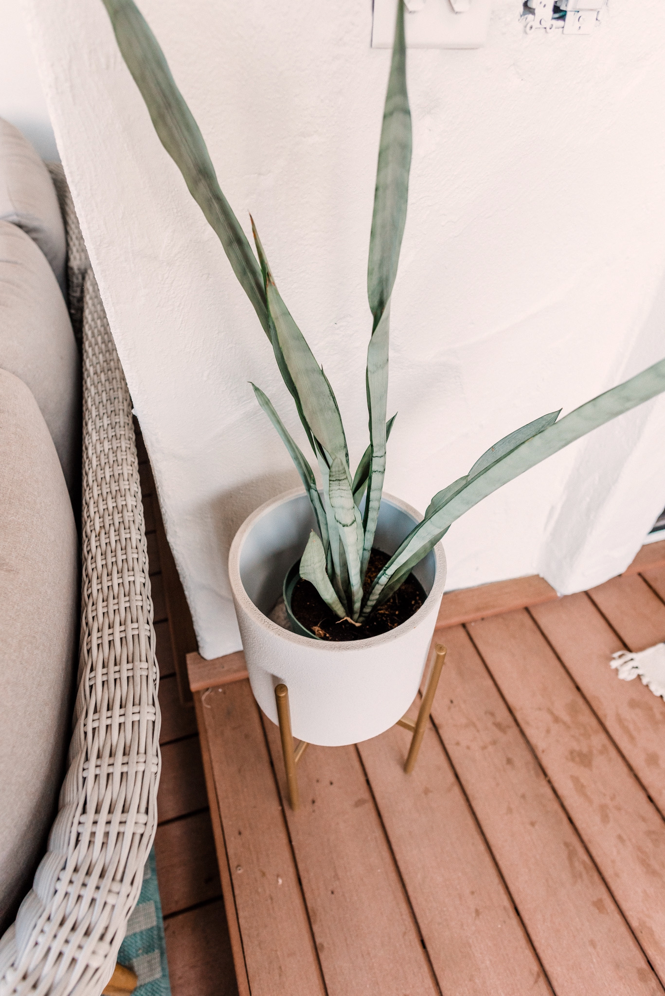CB2 OUTDOOR DECOR featured by top San Diego lifestyle blogger, Navy Grace. | CB2 Furniture by popular San Diego life and style blog, Navy Grace: image of a CB2 Seminyak Gray Planter with a snake tongue plants.