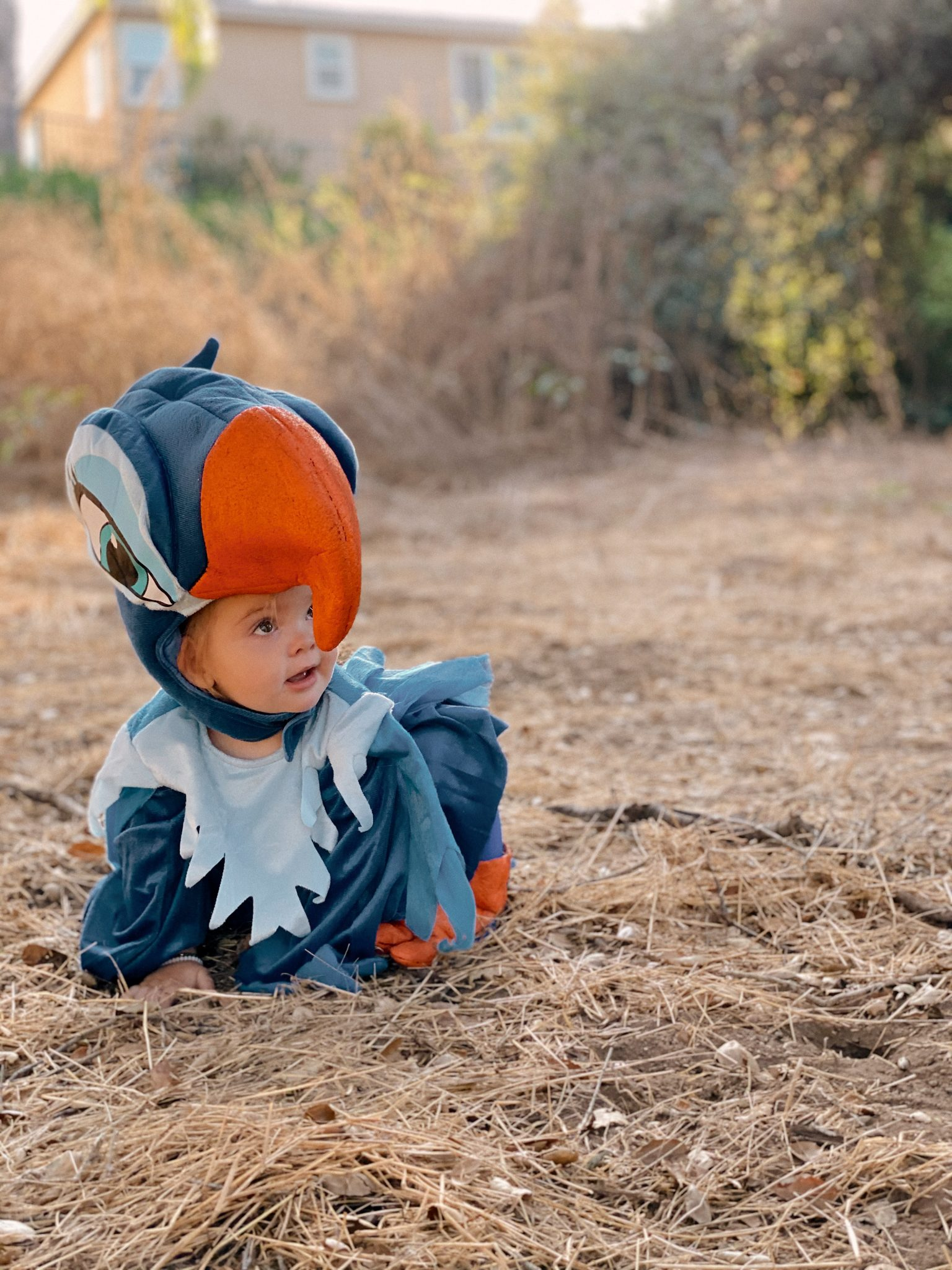 Family Halloween Costumes by popular San Diego lifestyle blog, Navy Grace: image of a little girl dressed up as Zazu from The Lion King.
