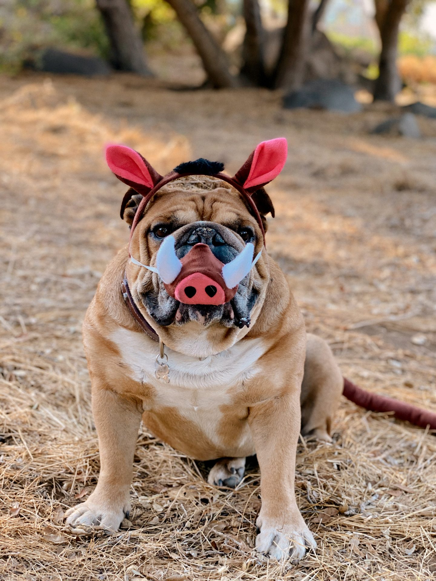 Family Halloween Costumes by popular San Diego lifestyle blog, Navy Grace: image of a dog dressed up as Pumba from The Lion King.